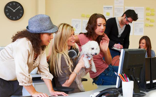 perros y trabajo en equipo