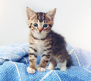 Talento felino: ¡5 cosas que puedes aprender de los gatos para triunfar en tu trabajo!